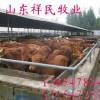 今年小牛犊最新价格行情