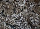 干灰树花(栗蘑)批发,迁西产地一手货源