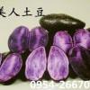 黑土豆  黑美人马铃薯 紫色马铃薯  红美人土豆
