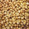 炒熟小麦粒  熟小麦粉  熟小麦胚芽粉