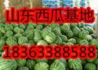5月西瓜甜瓜产地直销低价批发