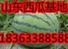 滨州大棚西瓜种植基地8斤以上精品薄皮西瓜低价供应直销