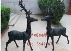 园林铜雕塑,铜雕鹿,铸铜鹿,铜雕塑梅花鹿