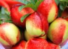 极早熟油桃518油桃价格