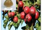 山楂果提取优质山楂总黄酮 山楂叶提取活性物质牡荆素
