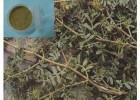 刺蒺藜提取活性物质 刺蒺藜皂甙 薯蓣皂甙就找浩翔生物