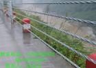 供应双波热镀锌公路波形护栏厂家缆索护栏厂家价格