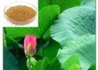 荷叶提取活性物质荷叶碱利尿通便、通肠毒、降脂除油