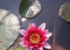 安新县白洋淀水生植物