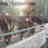 2016年提升肉驴养殖效益的方法