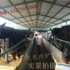 大型肉驴养殖基地-天龙肉驴养殖场