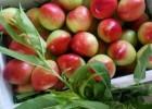 供应陕西油桃 陕西油桃大量上市
