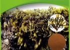 墨角藻提取物 陕西龙孚