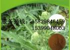朝鲜蓟提取物 洋蓟酸 绿原酸 陕西龙孚