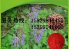 丹参提取物 丹参酮ⅡA 丹酚酸B 隐丹参酮