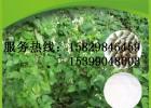 白芸豆提取物 菜豆素 菜豆蛋白 a-淀粉酶抑制剂 陕西龙孚