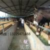 山东天龙肉驴养殖场信誉好-肉驴质量好