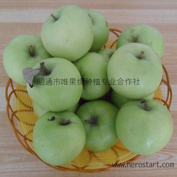 批发青苹果青金帅青香蕉新鲜水果云南昭通苹果早熟苹果