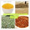 黄米、大黄米、糜子米、裸糜子、栗米  黎
