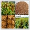 谷子、带壳黄谷子小米、鸟饲料、谷子粒  谷子粉