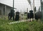 太原养殖绿色波浪网忻州场地护栏网阳泉农场隔离防护网